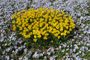 Gerhard-Becker-10_Die-Farbe-Gelb
