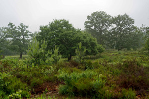 Wahner-Heide-05-Uwe-WinterfeldDSC00333_DxOtest---Kopie