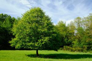 Wahner-Heide-Andreas-Schoenbeck01_DSCF6874