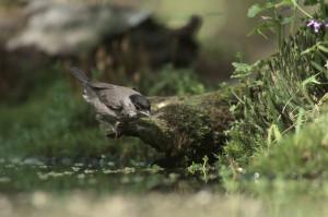 Wildlife13NEF_2018.05_260